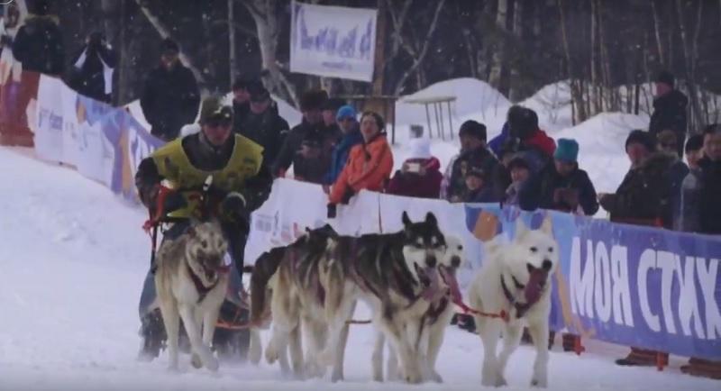 """""""Beringia-2019"""" – Das härteste Schlittenhunderennen Russlands"""