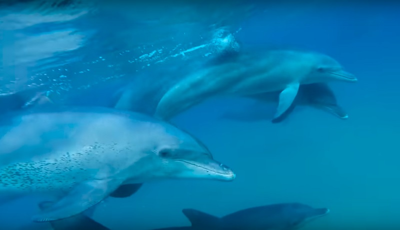 Dutzende Delphine auf der Krim gestrandet